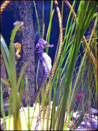 Sea Animals Sea Horses Water_collection