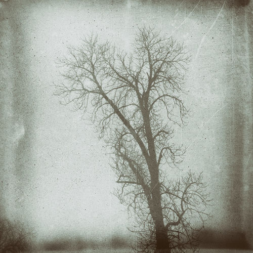 Beauty In Nature Cold Temperature Fog Foggy Day Outdoors Plant Tree Tree In Fog Wet Plate Winter