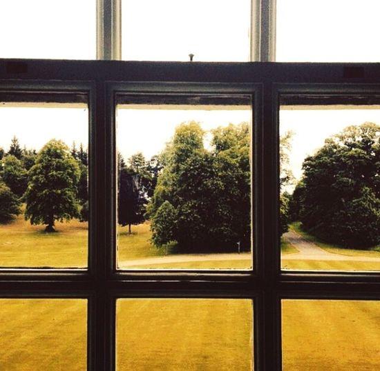 Nature On Your Doorstep Trees Window Calander House