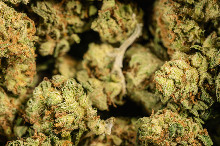 Marijuana Weed Cannabis Dope buds background Weed Thc Texture Still Life Smoke Selective Focus Sativa Prescription  Pot Plant Outdoors Oil No People Nature Natural Narcotic Multiple Moss Medicine Medicinal Herbs Medicinal Medical Cannabis Medical Marijuana - Herbal Cannabis Marijuana Lifestyle Lichen Legalization Leaf Illegal High Herbal Herb Hemp Healthcare And Medicine Health Care Health Harvest Growth Grow Green Color Green Grass Ganja Full Frame Food And Drink Food Farm Drugs Drug Dispensary Day Close-up CBD Cannabis Plant Cannabis Buds Bud Brown Black Background Backgrounds Background Alternative Agriculture Addiction