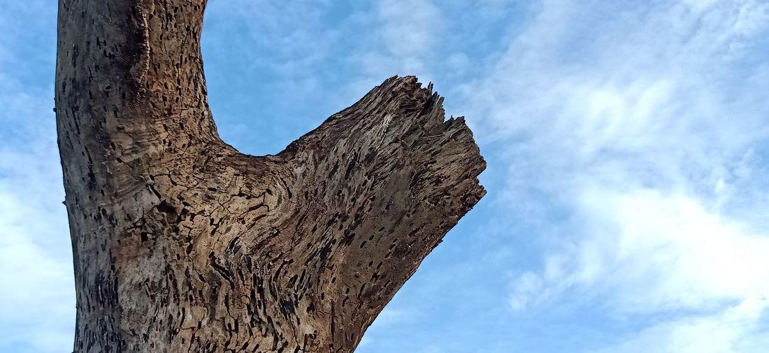Big tree decay