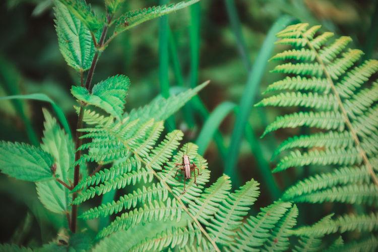 Close-up of grasshopper on fern