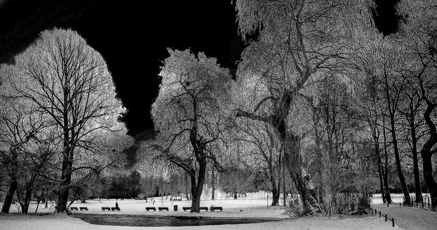 Winter Traveling Nature Tree Photography Deutschland Photooftheday Kurztrip EyeEmNewHere Panasonic Lumix Blackandwhite Letsgosomewhere Bnw München Bavaria Schwarzweiß Germany Wanderlust Snow Isar Englischergarten Schnee Edited Madeingermany Naturelovers