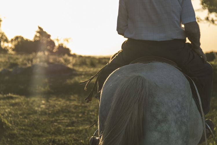 Rear view of man riding horse on land