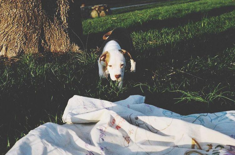 Spring Into Spring Fresh Enjoying The Sun Puppy Dog Cute Cobalt Blue By Motorola OpenEdit