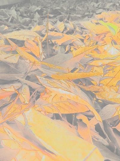 Autumn Leaves Autumn🍁🍁🍁 Hojas Secas Leaf Leaf Vein Leaf 🍂 Leafs Photography Tree
