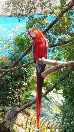 Bird Perching Macaw Tree Branch Red Scarlet Macaw Close-up Tree Trunk Palm Tree Palm Frond Tropical Bird