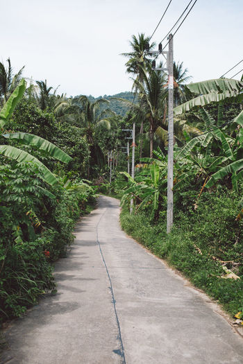 Plant The Way Forward Direction Tree Growth Green Color Transportation Footpath Road Nature No People Sky Day Land Tranquility Beauty In Nature Palm Tree Tropical Climate Tranquil Scene Diminishing Perspective Outdoors Long