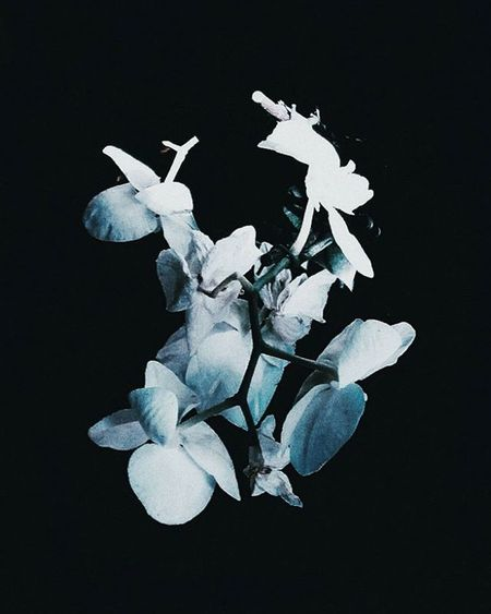 flowers bloom, spells are casted, i'm your tumb. - - - Photographer VSCO Dark Witch Witchcraft  Witchesofinstagram Flower Orchid Spring Scandinavianliving Minimalist Black Vscocam Vscogood Nature Naturelove