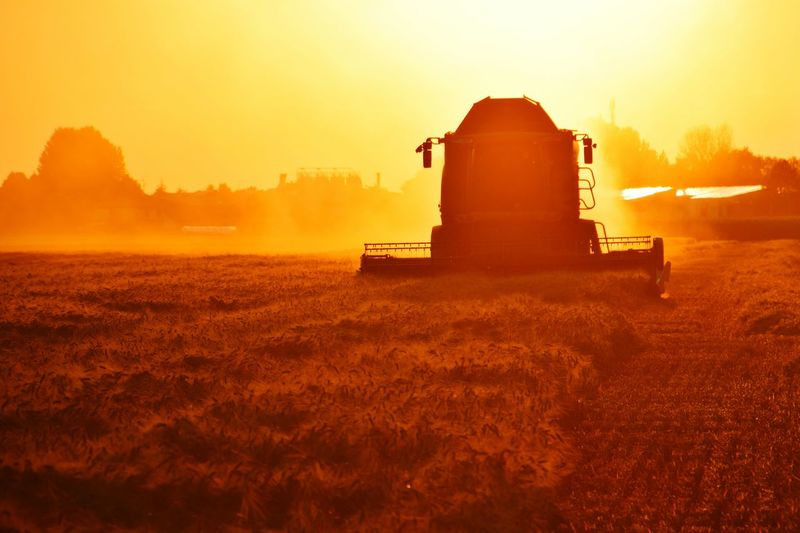 Combine Harvester Sunset Industry Agriculture Fog Silhouette Rural Scene Dawn Field Cereal Plant Agricultural Equipment Agricultural Machinery Tractor Cultivated Land Farm Worker Agricultural Field Farmland The Great Outdoors - 2018 EyeEm Awards The Portraitist - 2018 EyeEm Awards 2018 In One Photograph