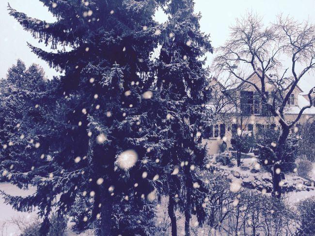 Winter Snow Snowing