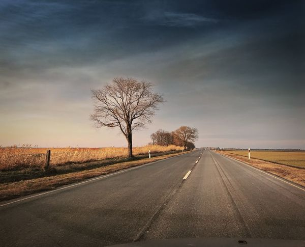Road Bare Tree The Way Forward Tree Diminishing Perspective Transportation Sky Landscape Nature Beauty In Nature Day Outdoors No People