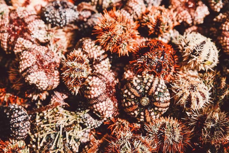Full frame shot of sea urchins