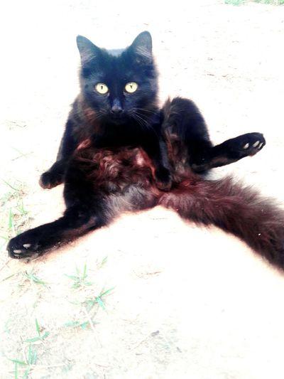 🌞🐱Hello World Tomando Sol Sábado Animal Photography Neko Miau Infraganti Photography