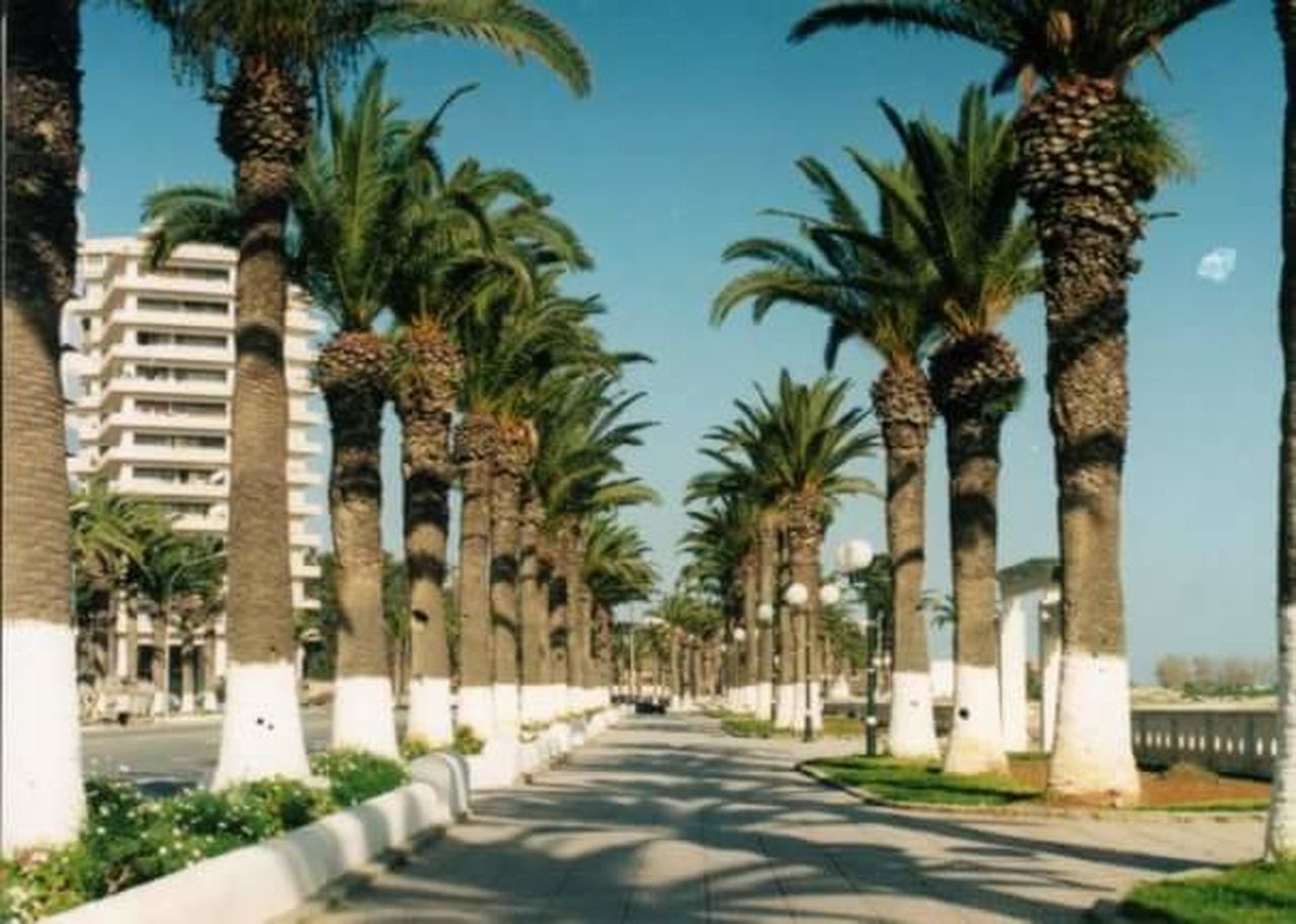 palm tree, tree, no people, outdoors, day, city, architecture, sky