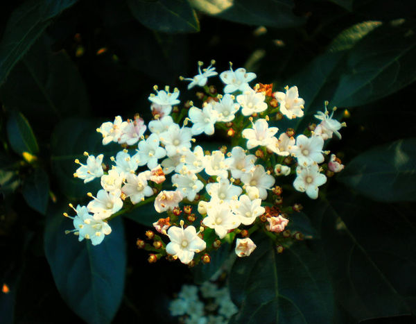 Beauty In Nature Bunch Of Flowers Flower Flowering Plant Growth Inflorescence Outdoors Sunlight