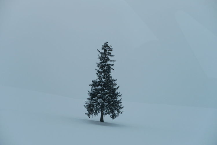 Pine tree on snow covered field against sky