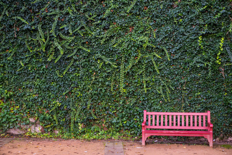 Bench Chilling Contrast Green Green Color Growth Minimalism Nature No People Red Wall