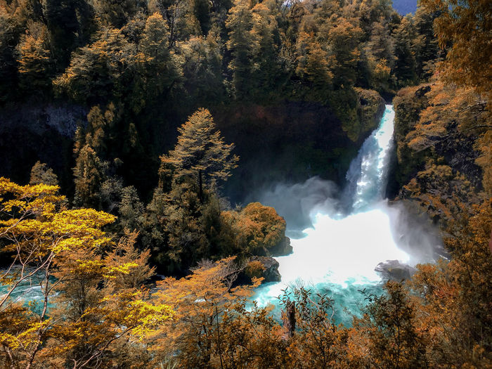 Huilo Huilo falls... Tree Beauty In Nature Plant Scenics - Nature Autumn Forest Growth Water Change Nature Non-urban Scene Land No People Motion Waterfall Tranquility Day Rock Tranquil Scene Outdoors Flowing Water Power In Nature Flowing Tourism Travel