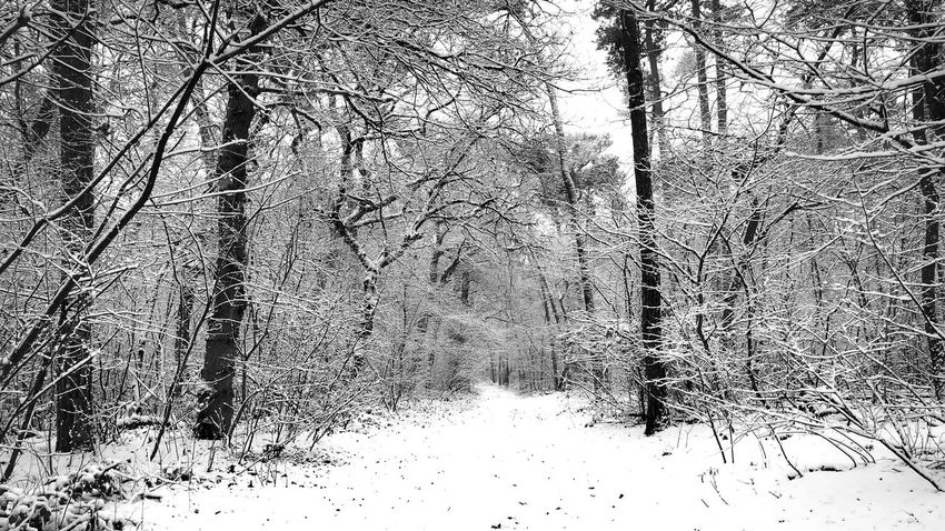 Bare Tree Beauty In Nature Branch Cold Temperature Day Forest Landscape Nature No People Outdoors Scenics Snow Tranquil Scene Tranquility Tree Winter