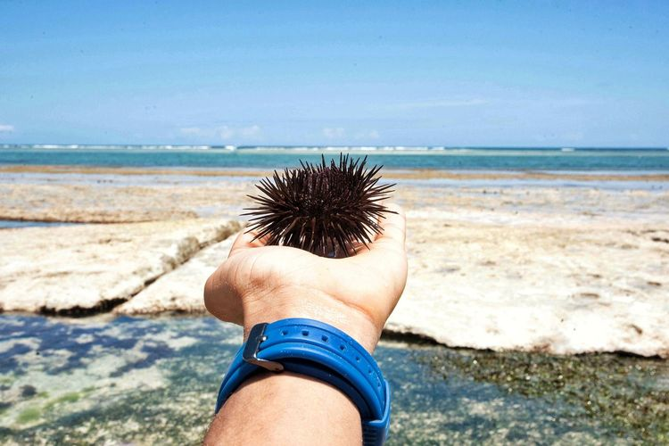 Close-up of hand holding sea urchin at beach against sky