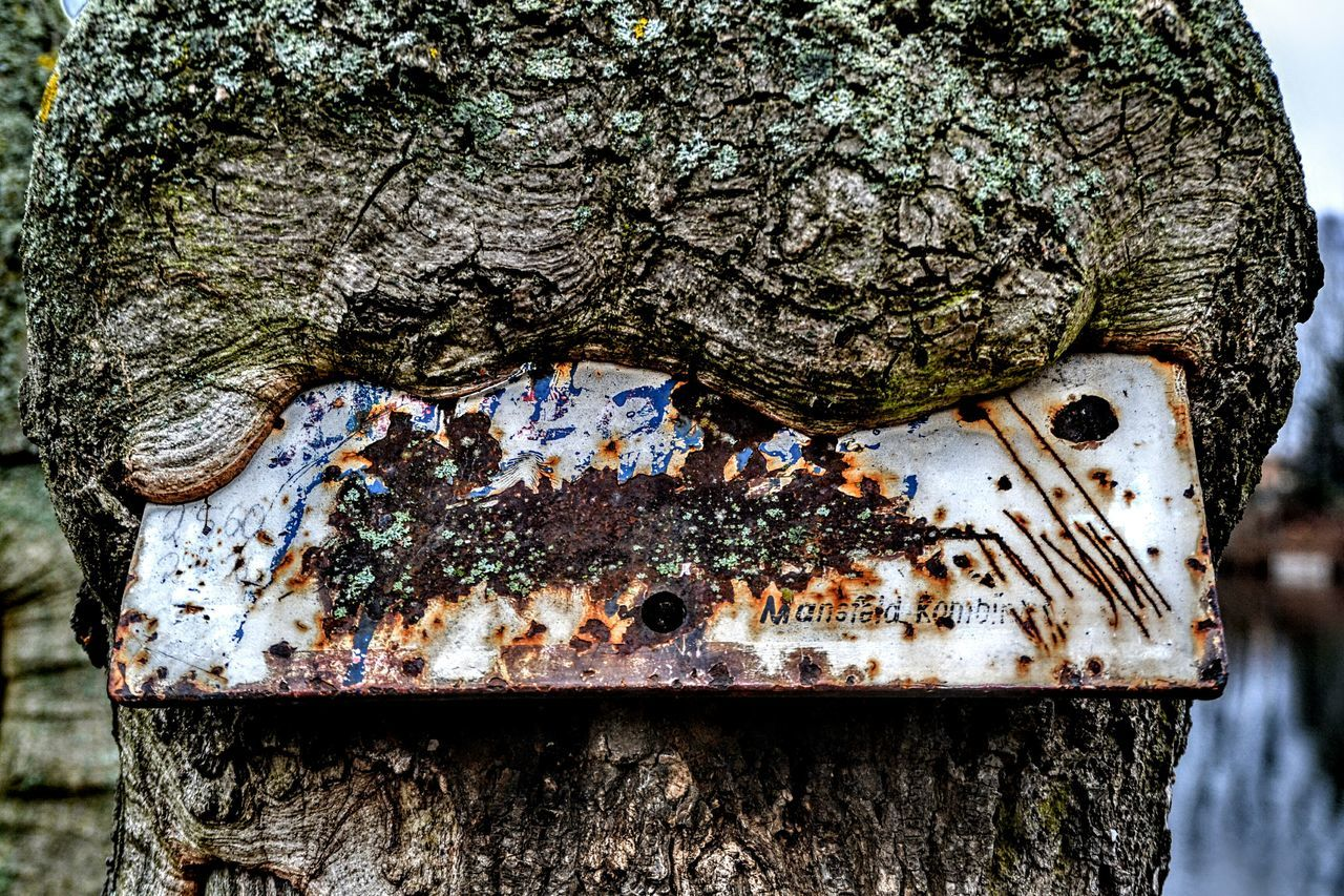 tree trunk, trunk, close-up, textured, tree, no people, metal, day, wood - material, plant, rough, rusty, nature, outdoors, moss, weathered, old, pattern, backgrounds, focus on foreground, bark, lichen