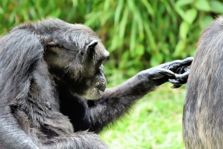 Wildlife and forestry EyeEm Best Shots EyeEm Nature Lover Getty Images Animal Animal Head  Animal Themes Animal Wildlife Animals In The Wild Ape Close-up Day Focus On Foreground Hair Mammal Monkey Nature No People One Animal Outdoors Plant Primate Vertebrate Zoo