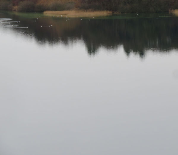 Water Lake Reflection Tree Sky Calm Tranquil Scene