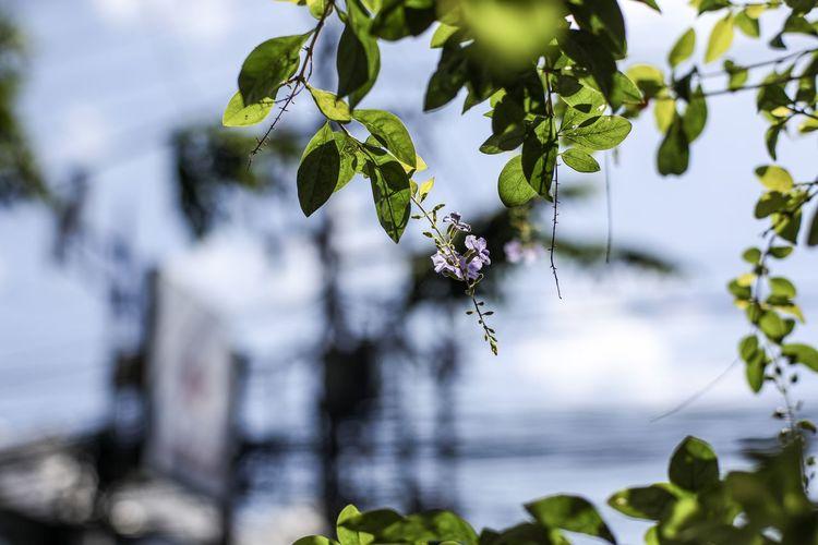 Tender plant,