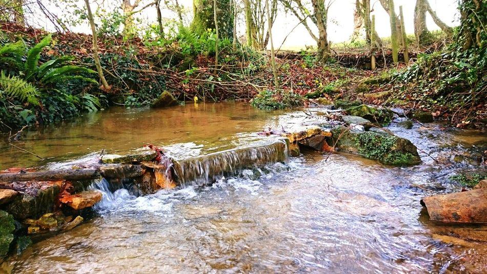 Nature Photography Outwalkingthedog Woodlandwalks Inthewoods Stream Water Water Reflections
