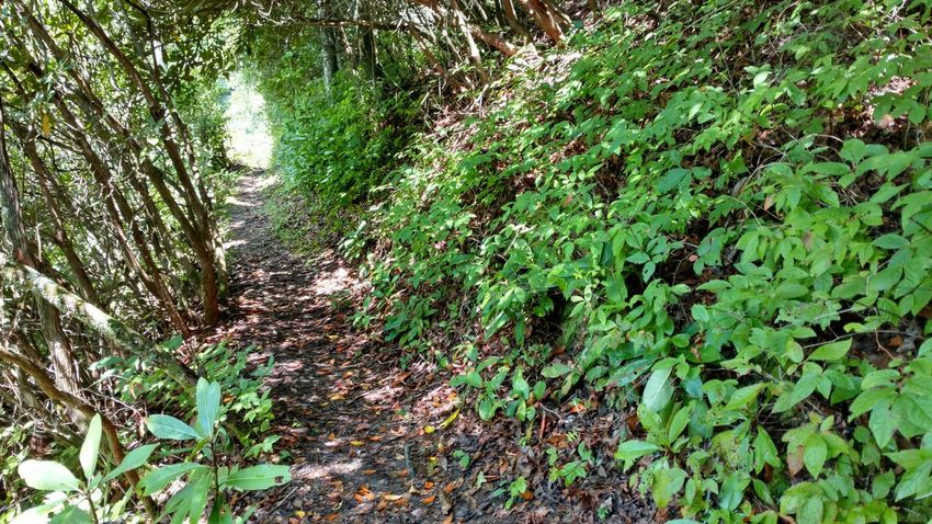 Forestwalk Forest Path green WoodLand Late Summer Short Hike Under The Canopy Enjoying Life Adventure Time Outdoors No People Beauty In Nature Non-urban Scene
