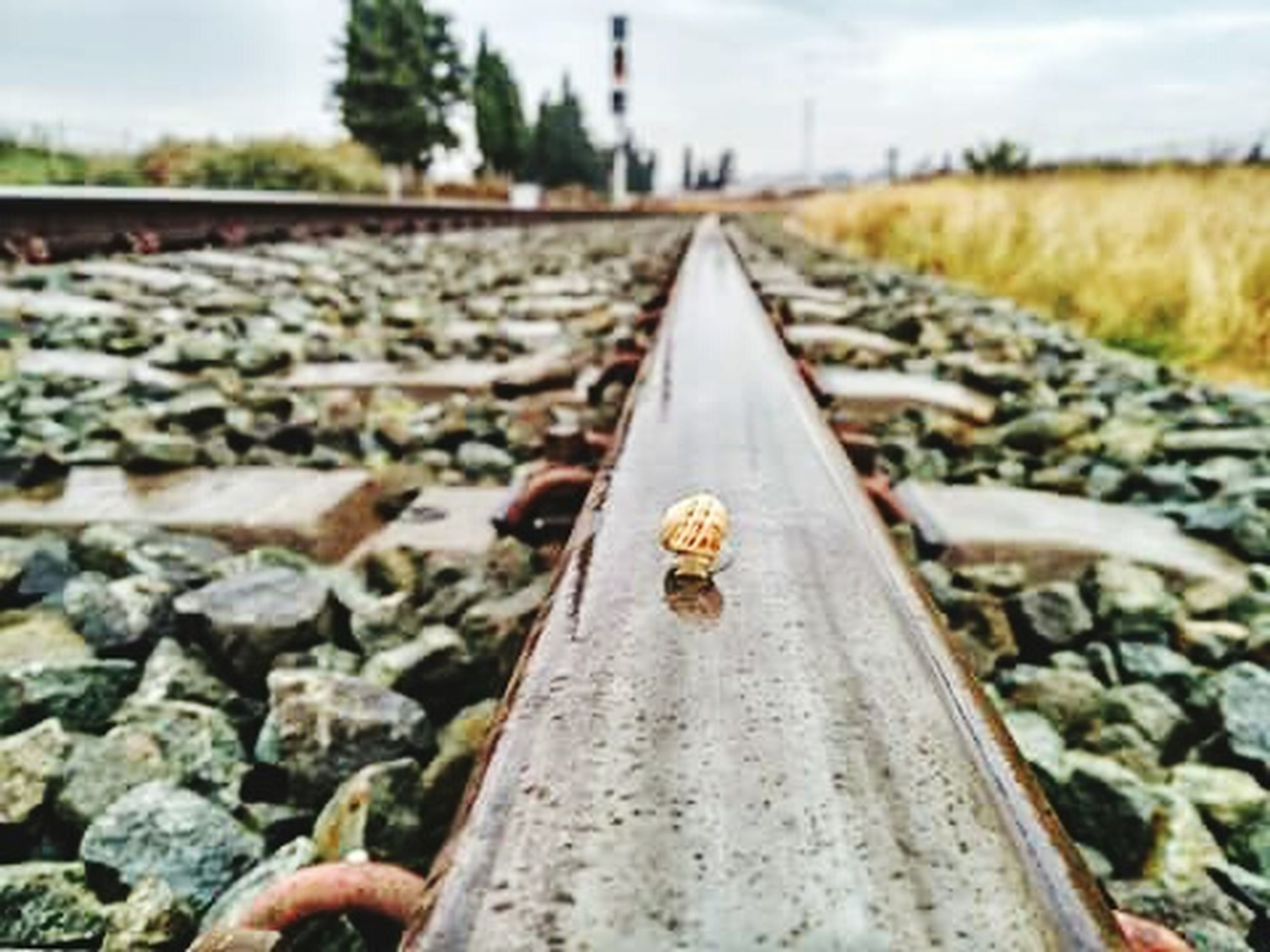 railroad track, transportation, diminishing perspective, the way forward, rail transportation, vanishing point, focus on foreground, metal, selective focus, surface level, sky, day, close-up, outdoors, gravel, nature, tree, rusty, straight, no people