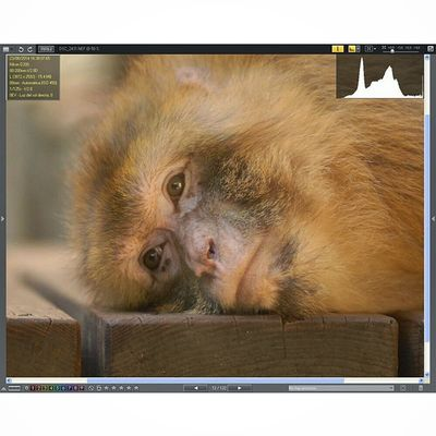 Monkey Postproduction Nikoncapture Nikonshots zoodebarcelona monos colour calidez captivity human faces expresion nikkorlenses histogram exif metadata zoo editedphotography wildlifephotography Zoo de Barcelona, 2014.