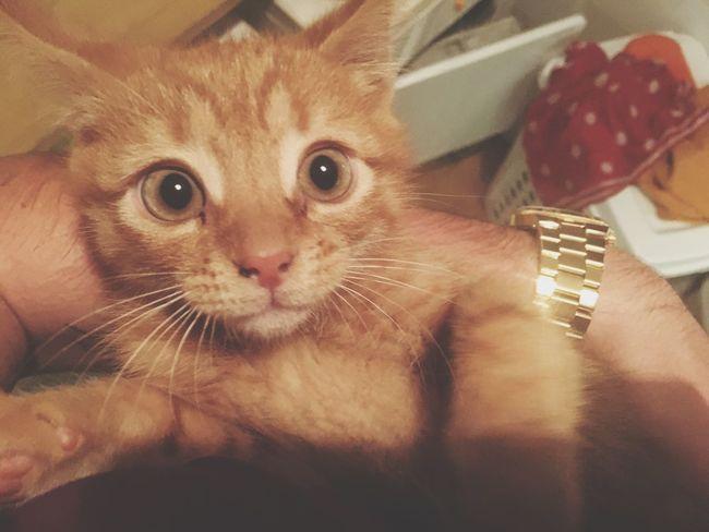 Isn't he cute Cat Kitten Kitty Animal Pets Pet Cute Beautiful Love