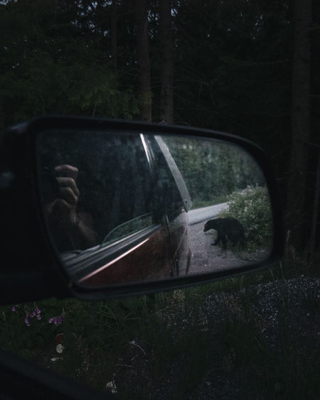 Man reflection while photographing bear reflection on side-view mirror of car