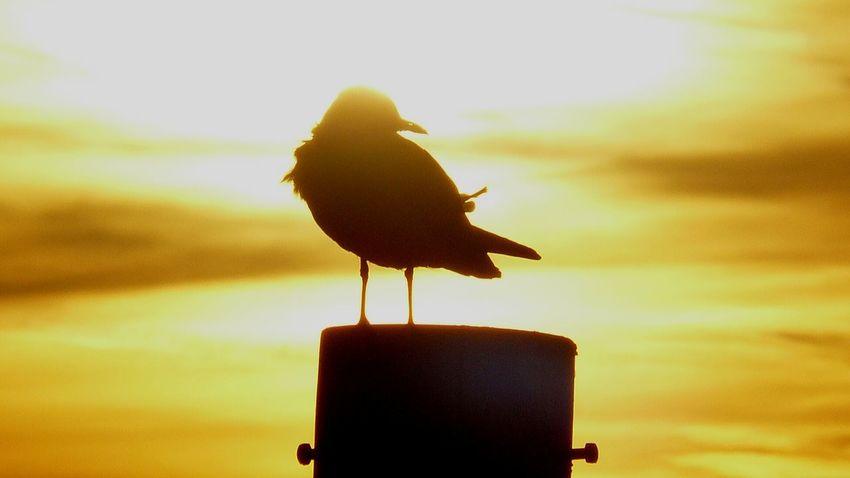 Bird Water Perching Sunset Sky Close-up