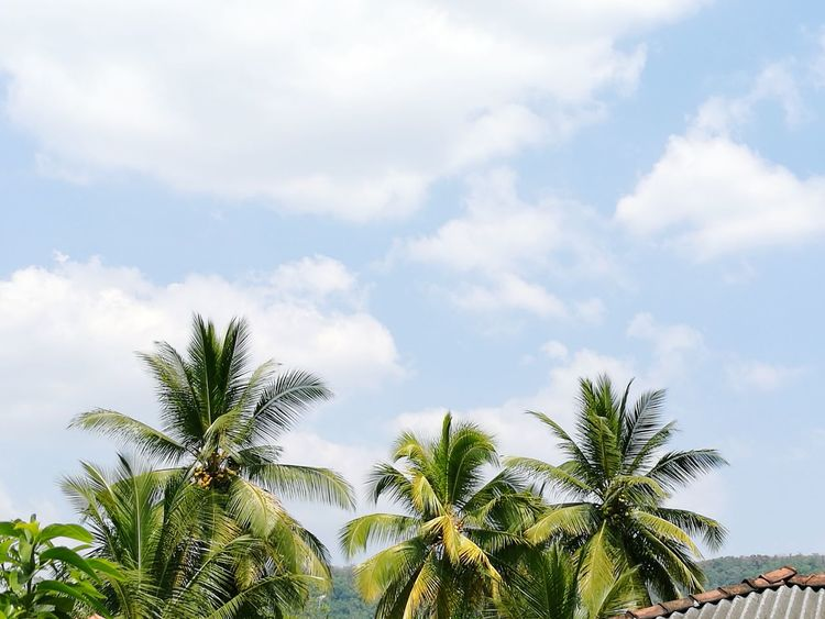 Adapted To The City Coconut Trees Afternoon Sky And Clouds