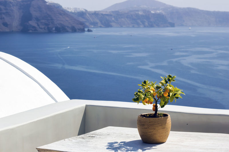 Santorini, greece a pot with flower or plant and a plate on a wooden table against sea ocean