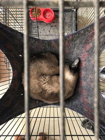 很舒服 地方为了 猫 Cozy Hammock for a Cat Shanxi, China 太原 Iphonephotography