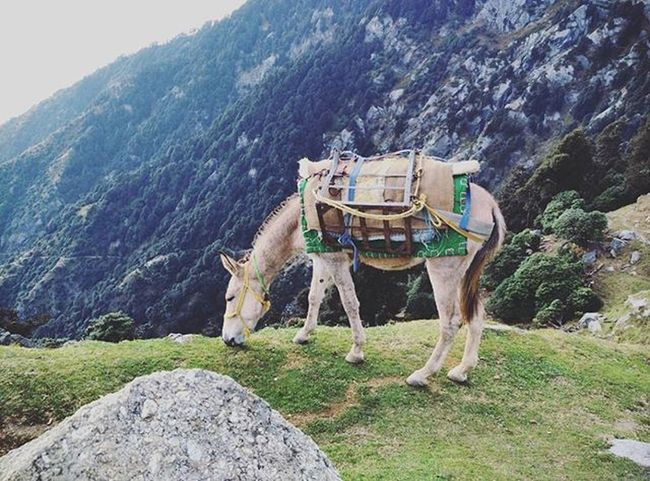 Horse eating Grass. Photography Instagram Instagood Instalike Instapic Doubletap India Sun Sky Clouds Himachal Mountains Hills Cloudlovers Mi4 Mi4photography Xiaomimi4 Nature Beautifulnature Naturephotography Photographyislifee ☁ Mountainscape Landscape Horse animalphotography lovelyanimals