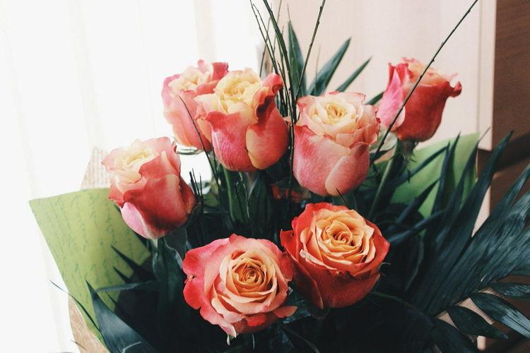 Flower Photography Flowers Flowerporn Flower Flowerlovers Love To Take Photos ❤ Love Love ♥ Love♥ Love It Love♡ Love <3 Loveit LoveFlower🌺 Loveflower LoveFlowers🌸 Loveflowers