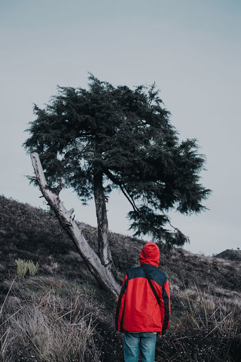Rear view of man standing by tree against sky