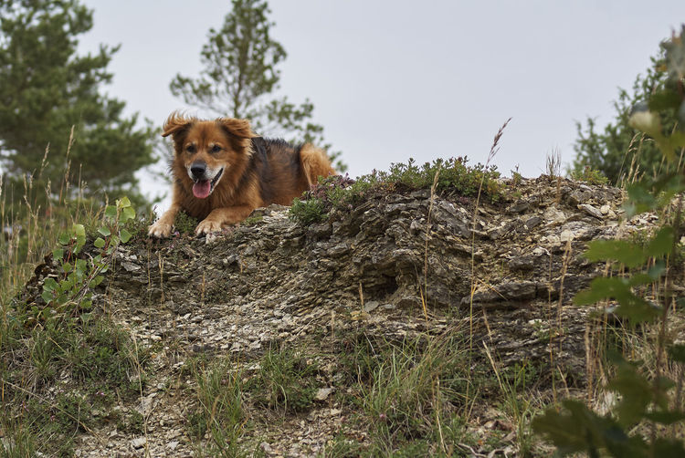 50+ Dog Rocks, Batesford Pictures HD | Download Authentic Images on