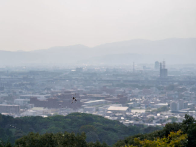 Fushimi Inari-Taisha Architecture Beauty In Nature City Cityscape Day Development Distant Focus On Foreground Fog Foggy Fushimi Inari-taisha Geology Growth Hill Mist Mountain Mountain Range Nature Physical Geography Residential District Scenics Tranquil Scene Tranquility Travel Destinations Tree
