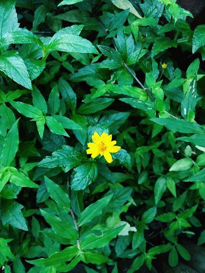 Verdin 💚Flower Freshness Beauty In Nature Leaf Day Plant Nature Green Color Fragility Flower Head Macro Nature