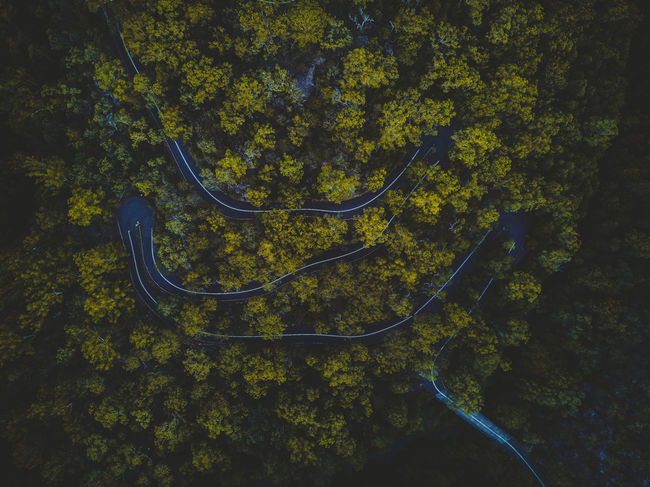 This winding road snakes its way through dense Australian bushland. Australia Australian Australian Landscape Drone  EyeEm Best Shots EyeEm Nature Lover EyeEmNewHere Road Aerial View Beauty In Nature Dronephotography Droneshot Forest High Angle View Landscape Nature Outdoors Tranquility Tree Week On Eyeem Winding Road Perspectives On Nature Go Higher