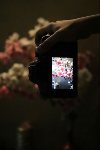 Capturing the moment ❤ Photography DSLR Camera Canon Canon_photos Flowers Dark Focus Focus On Foreground Close-up Close Up EyeEm Gallery EyeEm Selects Eyeem Market EyeEm Best Shots EyeEm Best Shots - Nature EyeEmBestPics Getty Images Amazing EyeEm Nature Lover Nature Photography Nature_collection Naturelovers Nature Is Art Camera - Photographic Equipment Canonphotography Canon Creativity Japanese Culture Fake Flowers Canoneosrebelt6i Leaf 🍂 Nature Beauty In Nature Plants EyeEmNewHere Flower A New Perspective On Life