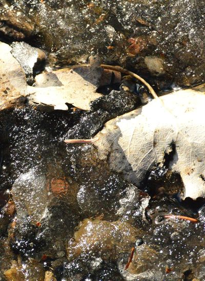 Leaves on top of ice, ground underneath Outdoors Winter Cold Temperature Nature Brown Leaf Thawing Melting Ice Pebbles Under Ice Out Doors