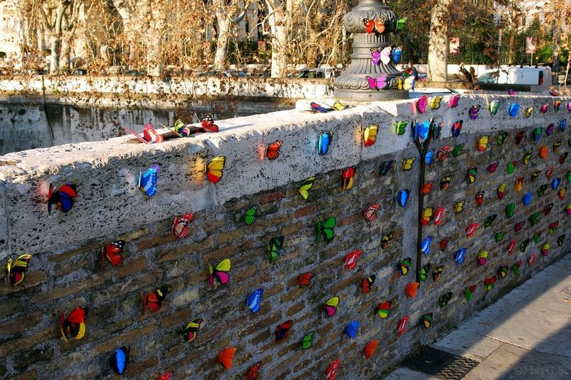 Architecture Building Exterior Day Nature Outdoors No People Butterflies Colored Butterflies Wall Rome (Italy) Historic Centre