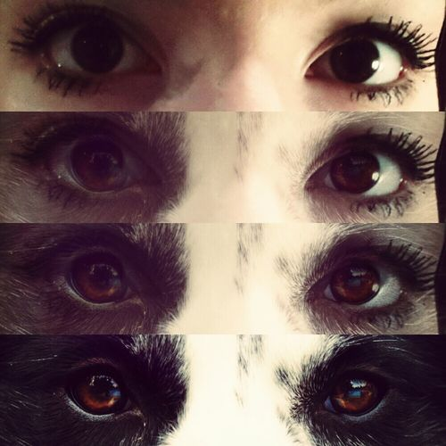 roar.♥ Eyes Photography Taking Photos Hanging Out